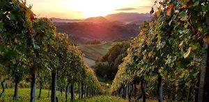 Izlazak sunca u vinogradima, Zagorje, autor: Jasenka Haleuš