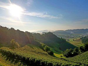 Vinogradi, Zagorje, autor: Jasenka Haleuš