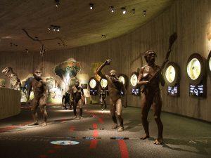 Muzej krapinskih neandertalaca, arhiva: MHZ - MKN